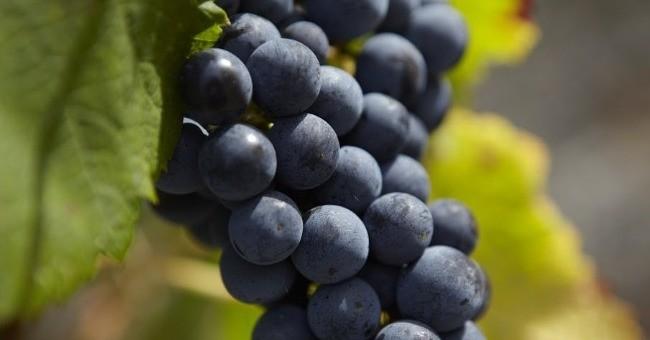 vins-alcools-domaine-chateau-de-panigon-dwl-france-a-civrac-en-medoc