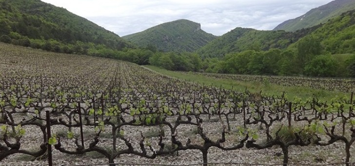 le-pays-de-dieulefit-bourdeaux-les-vastes-champs-de-vignes-offrent-des-cepages-d-exception-faisant-honneur-au-terroir