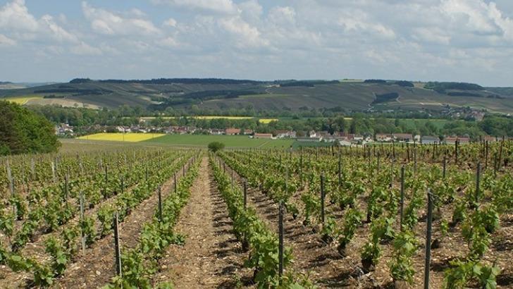 champagne-moyat-jaury-guilbaud-pratique-enherbement-et-utilise-des-engrais-organiques