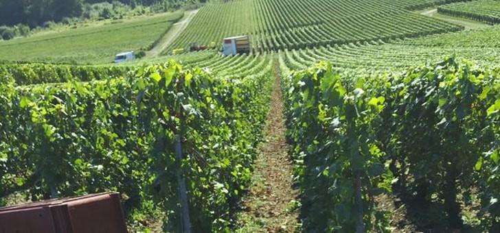 vignes-traitees-dans-respect-viticulture