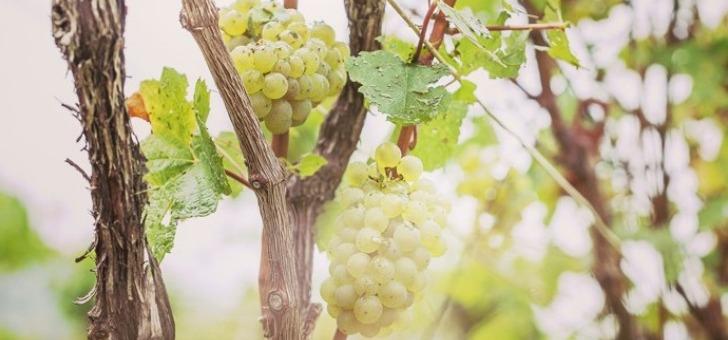 champagne-baron-albert-a-charly-sur-marne-maison-baron-albert-temoigne-d-un-grand-attachement-a-preservation-du-sol-et-de-environnement