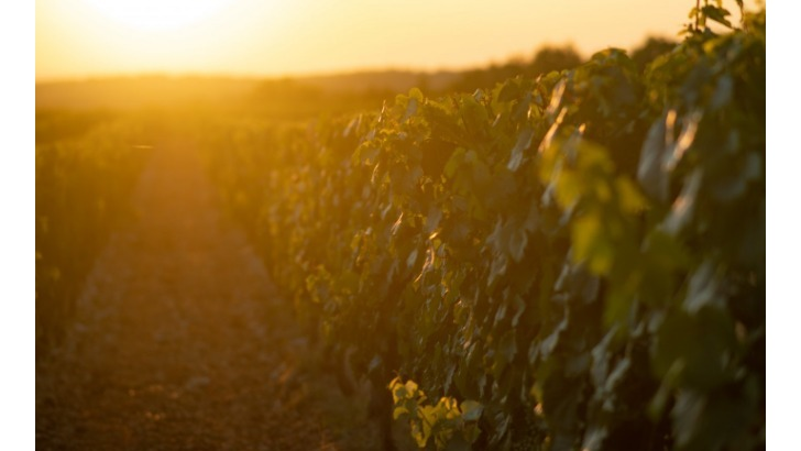 roques-de-cana-des-techniques-culturales-optimisees-afin-de-produire-meilleur-vin-possible