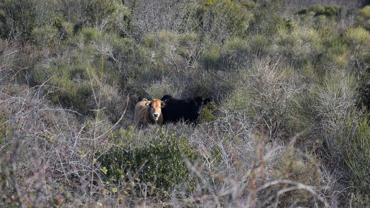 biodiversite-au-coeur-de-ses-preoccupations