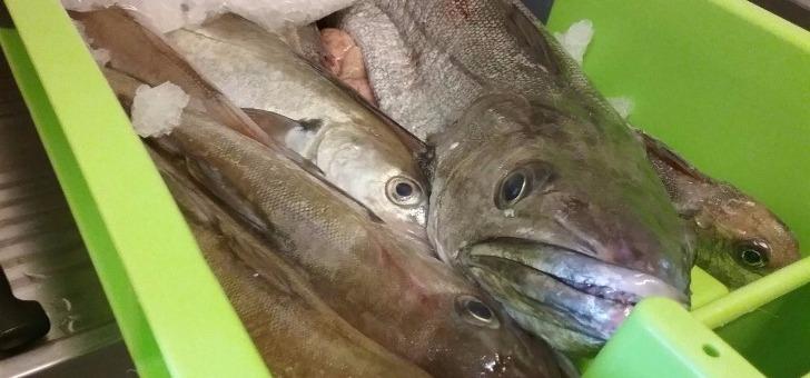 produit-et-cuisine-de-mer-carte-restaurant-alizes-a-saint-pierre-d-oleron-ile-d-oleron