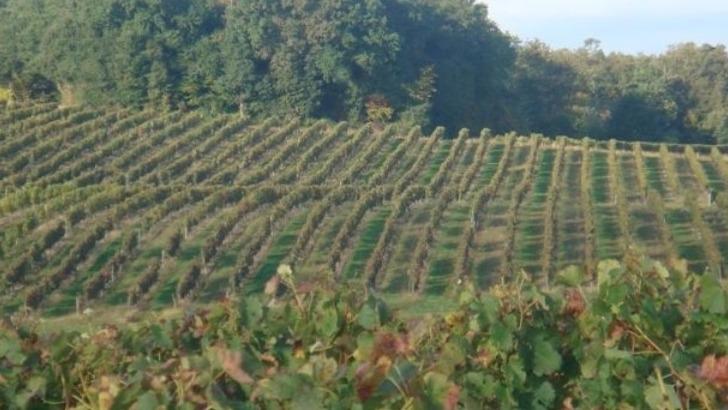 domaine-du-chateau-au-grand-paris-est-compose-de-35-hectares-de-vignoble