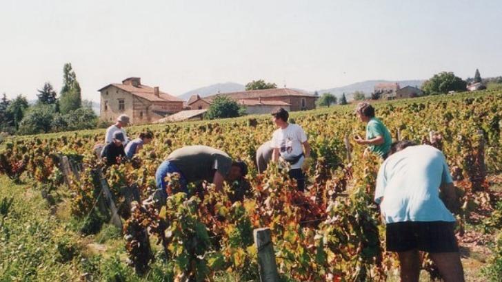 chateau-de-pravins-un-savoir-faire-et-une-competence-mis-au-service-de-vins-de-haute-qualite