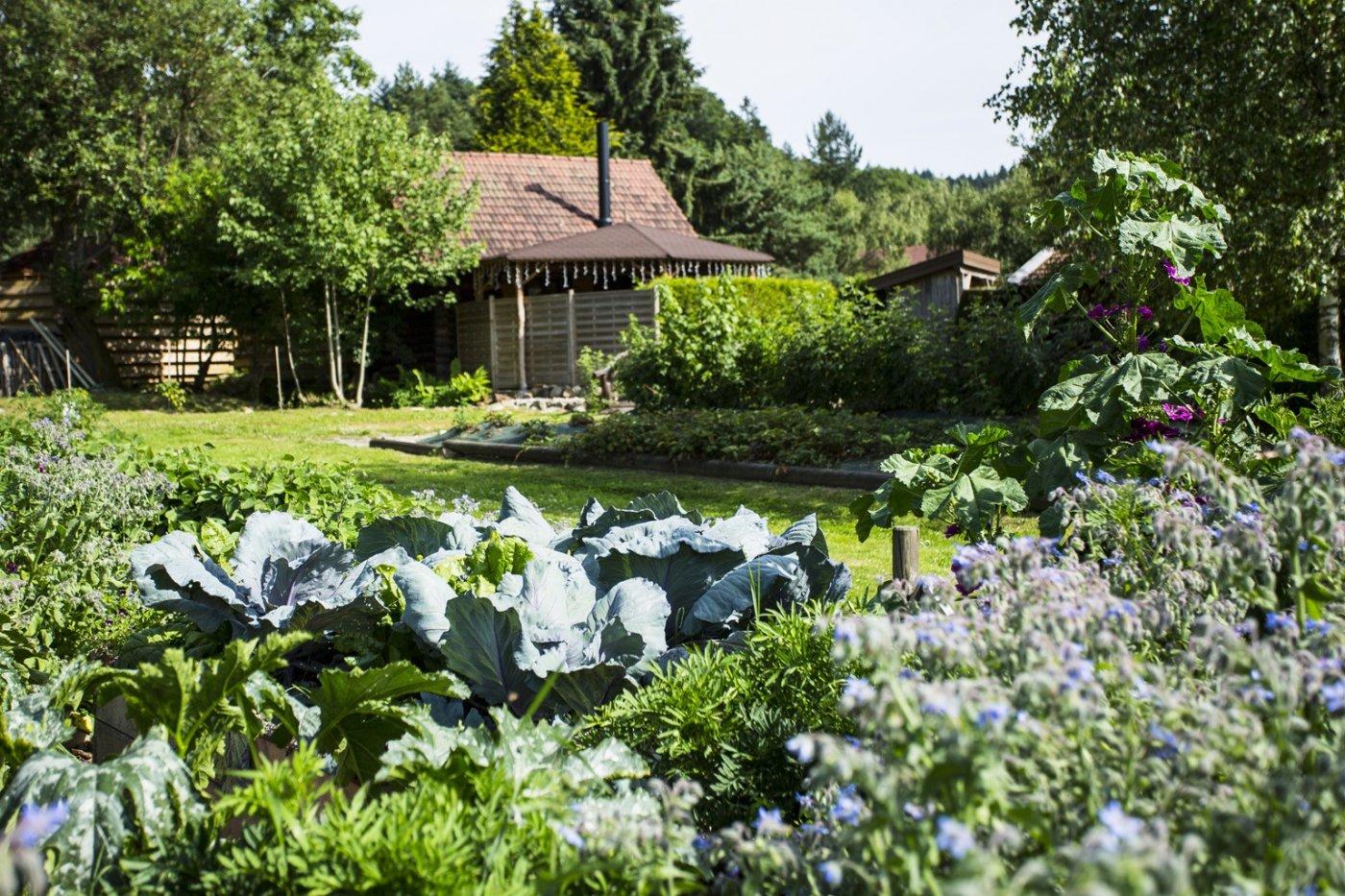 haut-jardin-decouverte-cueillette-fleurs-plantes