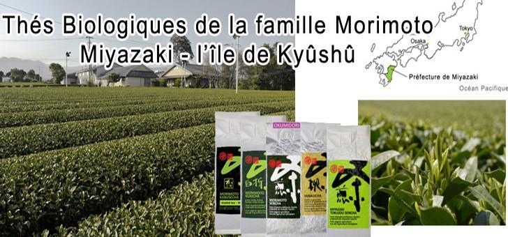 famille-morimoto-cultive-sept-varietes-d-arbustes-a-the-yabukita-kanaya-midori-oku-midori-oku-yutaka-minimi-sayaka-sakimidori-et-hybride-assamica-benifuki