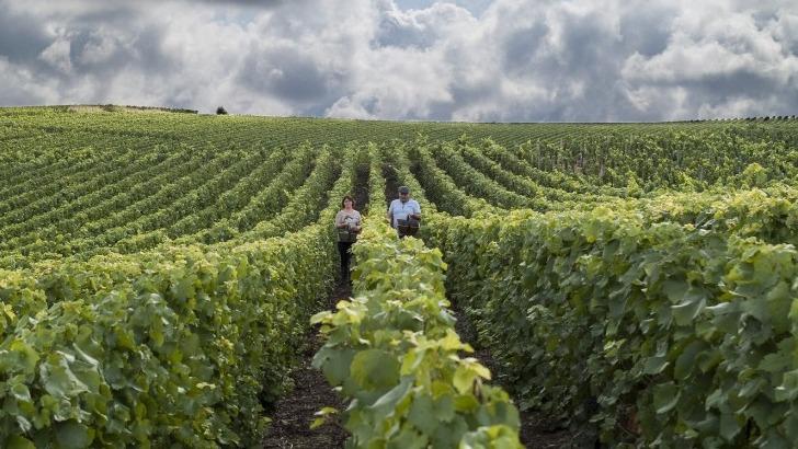 champagne-brisson-lahaye-un-vignoble-etendant-sur-montagne-de-reims-cote-des-blancs-et-vallee-de-marne