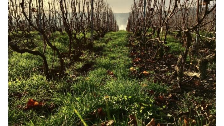 champagne-brun-servenay-a-avize-un-domaine-reparti-sur-3-villages-classes-grand-cru