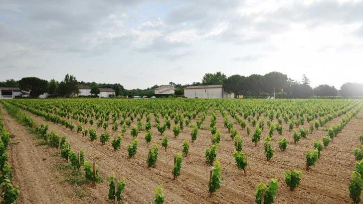 vins-alcools-domaine-chateau-tourteau-chollet-a-arbanats