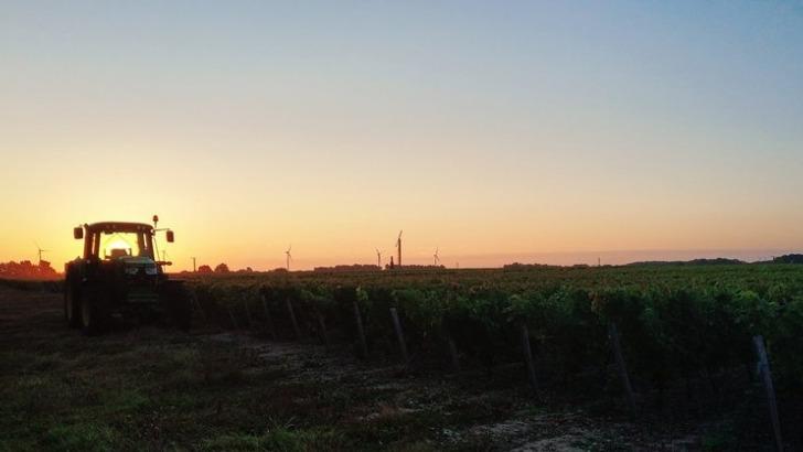 domaine-de-commanderie-a-cerbois-produit-des-vins-depuis-1983