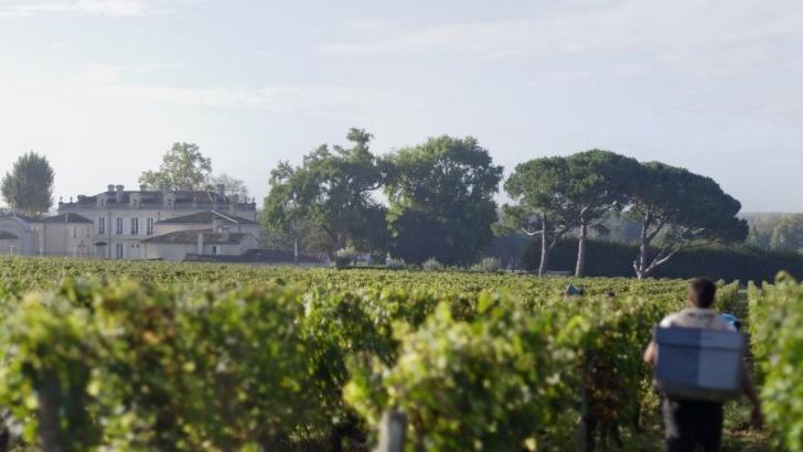 chateau-dauphine-a-fronsac-un-domaine-produit-d-excellents-vins-vignes-epanouissent-sur-un-terroir-riche-et-genereux
