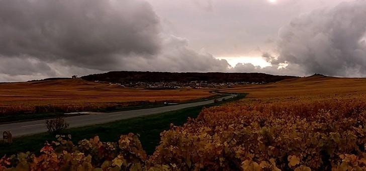 un-beau-panorama-sur-vignes