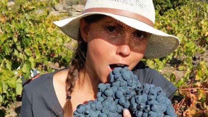 solen-genot-durant-vendanges-des-raisins-naturellement-sains