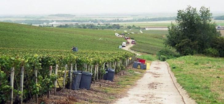 vignes-situees-dans-beau-village-de-cormicy
