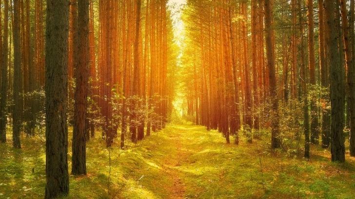 ecotree-soutenir-nature-dans-qu-fait-naturellement-de-beau