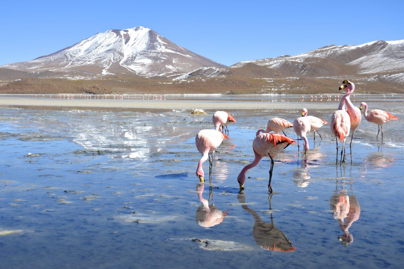 thaki-voyage-un-chef-d-oeuvre-ecologique-constituee-par-une-des-plus-importantes-diversites-naturelles-au-monde-sur-hauts-plateaux-de-bolivie-d-autres-especes-de-flamant-rose-sont-a-decouvrir