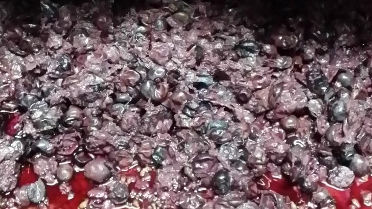 domaine-rabasse-charavin-vinification