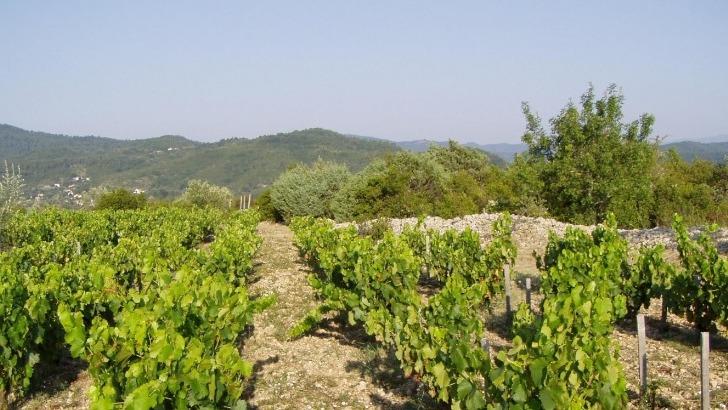 clos-roque-a-saint-ambroix-emprunte-pratiques-de-agroecologie-pour-preserver-son-terroir