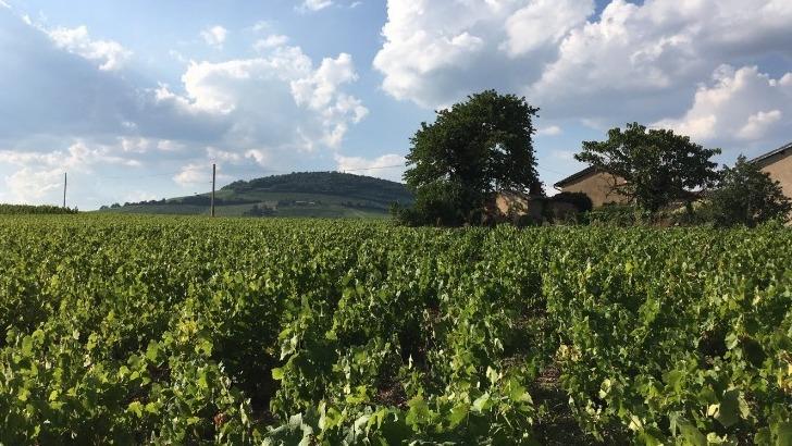 domaine-romain-jambon-des-vins-riches-issus-de-sols-a-tendance-limono-argileuse