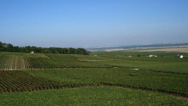 situe-a-villers-marmery-vignoble-champagne-g-boutillez-vignon-etend-sur-5-ha
