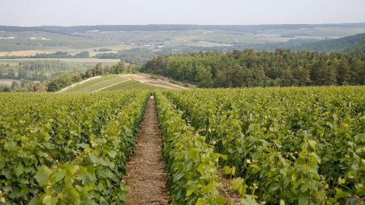 champagne-guy-lamoureux-a-riceys-7-hectares-de-vignoble-dedie-au-pinot-noir-et-au-chardonnay