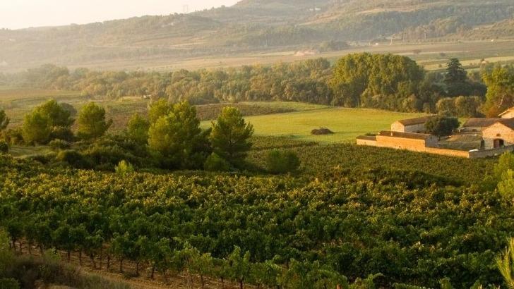 vins-alcools-domaine-chateau-viranel-a-cessenon-sur-orb