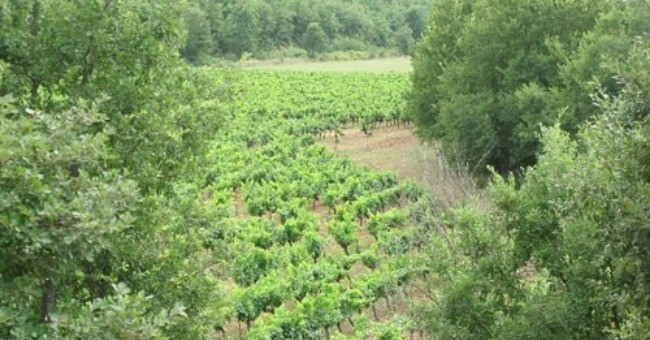 vins-alcools-domaine-domaine-de-la-bergerie-d-aquino-a-tourves