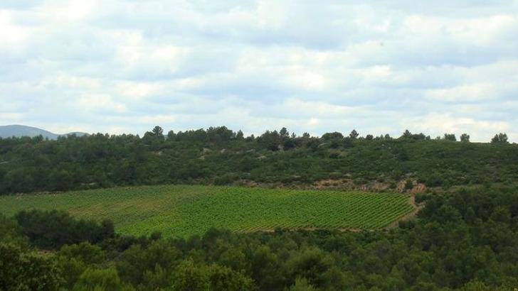 vignoble-partage-terres-avec-garrigue-du-domaine-pech-menel