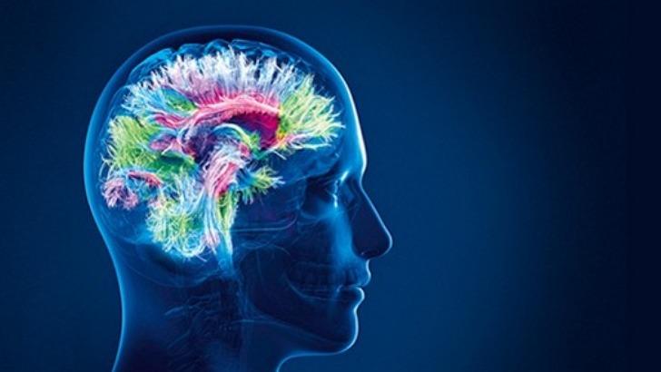 cerveau-un-organe-mysterieux-et-infiniment-complexe