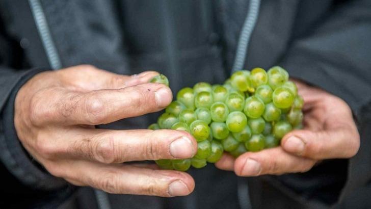 champagne-michel-fagot-a-rilly-montagne-des-champagnes-font-ressentir-lien-entre-vignes-et-vigneron