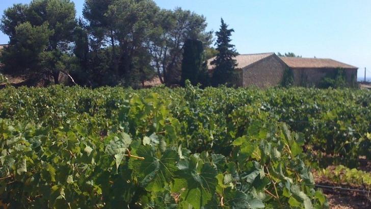 domaine-pech-menel-produit-des-vins-sont-une-ode-au-terroir-languedocien