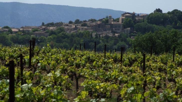 domaine-de-angele-inscrit-dans-viticulture-durable-pour-mieux-laisser-exprimer-vigne