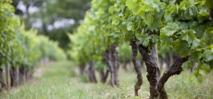 vitteaut-alberti-a-rully-maison-cultive-23-hectares-de-vignes-etendent-sur-cote-de-beaune-hautes-cotes-de-beaune-et-sur-cote-chalonnaise