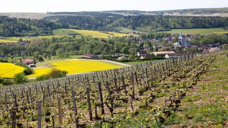 champagne-guy-lamoureux-a-riceys-epanouir-dans-viticulture-raisonnee