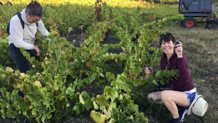 vignes-au-coeur-des-crus-du-beaujolais