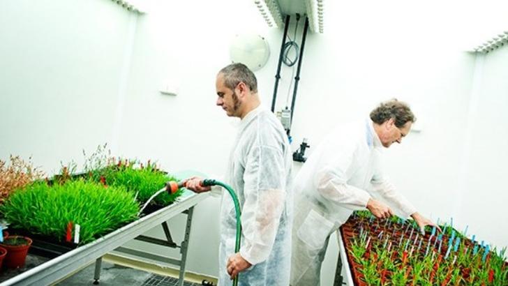 sps-gsr-un-reseau-specialise-dans-sciences-du-vegetal