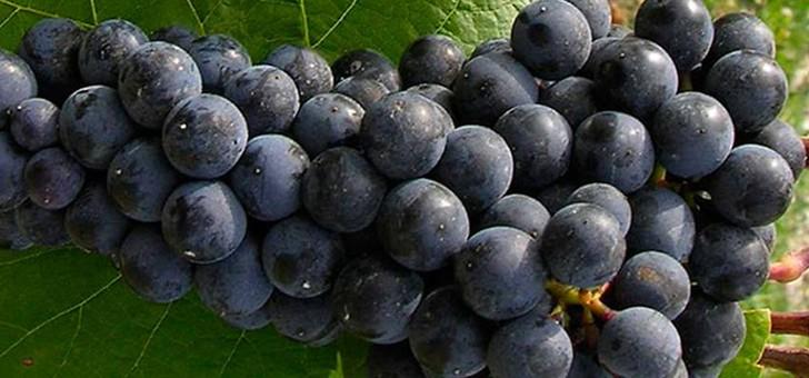 nicolas-faites-voyager-papilles-selection-vins