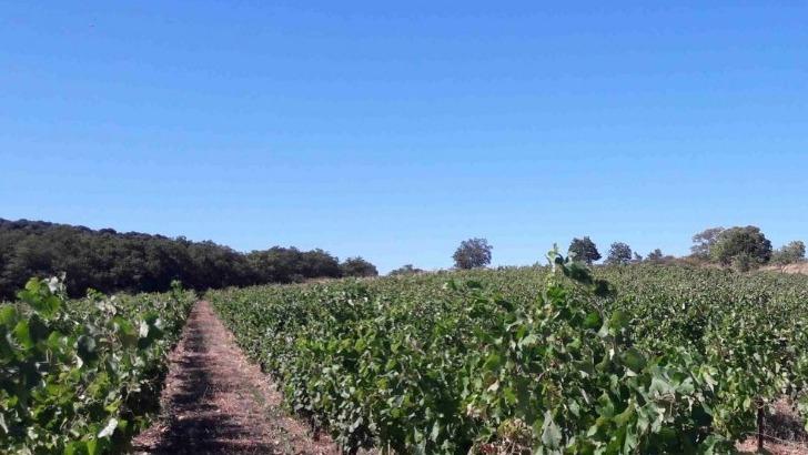 domaine-lacroix-vanel-a-caux-un-mode-cultural-preserve-biodiversite-des-terres