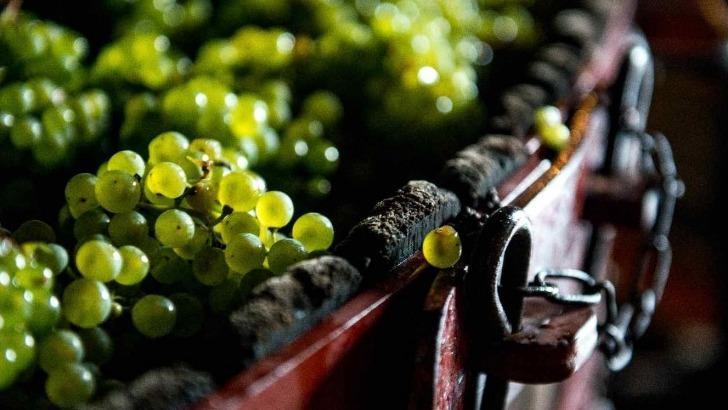 champagne-michel-fagot-a-rilly-montagne-des-cepages-champenois-pour-offrir-equilibre-parfait-entre-finesse-et-intensite