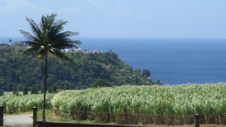 lieu-unique-martinique-magnifique-domaine-depaz-est-entoure-de-champs-de-canne-a-sucre-et-de-mer-des-caraibes