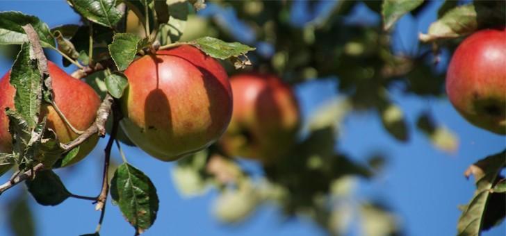 pressoirs-de-provence-de-beaux-fruits-prets-a-etre-presses