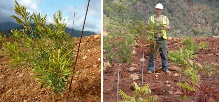 plantes-installees-sont-aussi-des-reservoirs-naturels-d-elements-metalliques-valorises-ecocatalyse