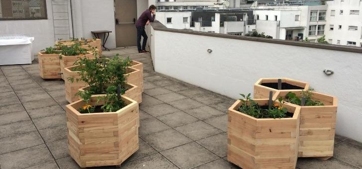 cueillette-urbaine-faire-une-pause-dans-un-climat-apaisant