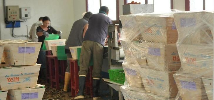 tifenn-yvon-a-locoal-production-et-vente-d-huitres