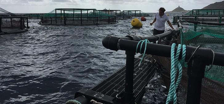 gloria-maris-a-afa-excellence-de-aquaculture-marine-francaise