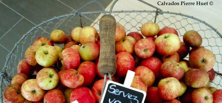des-pommes-au-gout-legerement-acidulees