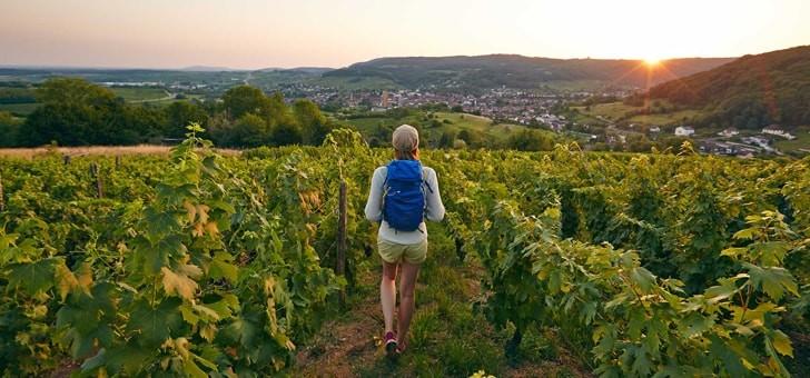 vignes-bourgogne-franche-comte