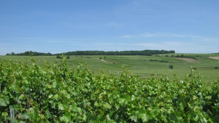 vignoble-et-coteaux-de-charly-sur-marne